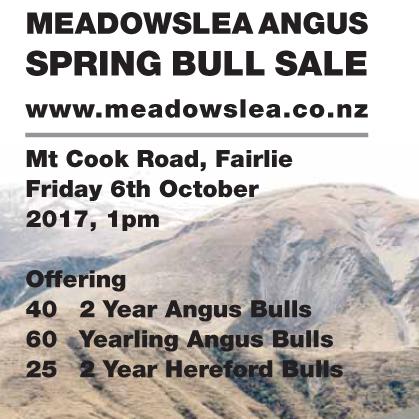 Meadowslea Angus - 6 October 2017