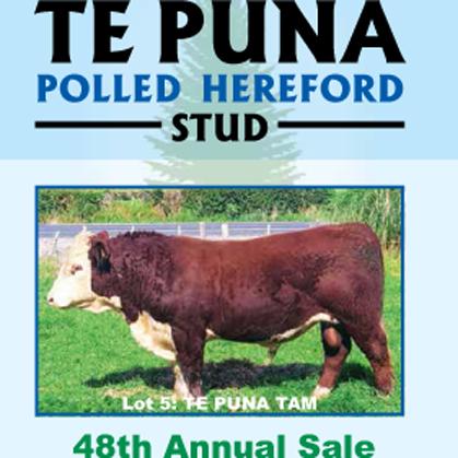 Te Puna Herefords - 3 July 2017