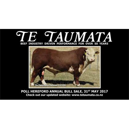 Te Taumata Hereford - 31 May 2017