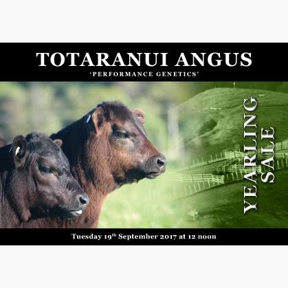 Totaranui Angus - 19 September 2017