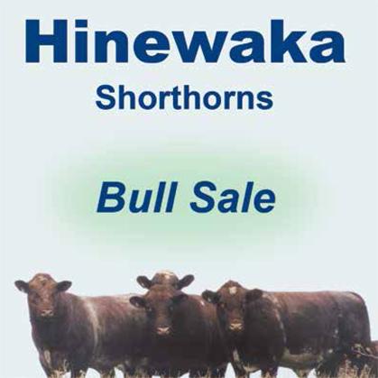 Hinewaka Shorthorns - 7 June 2017