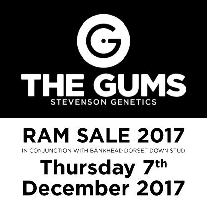 The Gums - 7 December 2017